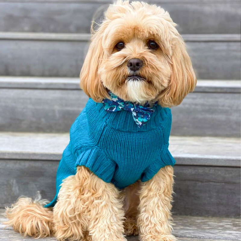 Coco & Pud Teal Cabel Sweater & Cavoodle Humphrey