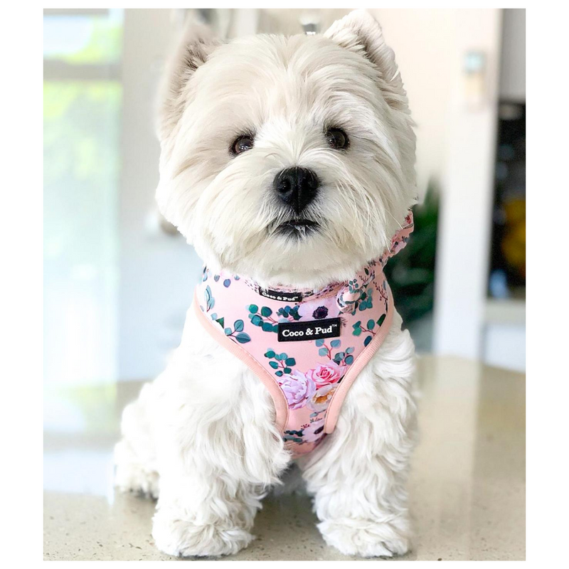 Coco & Pud Provence Rose Designer Dog Harness