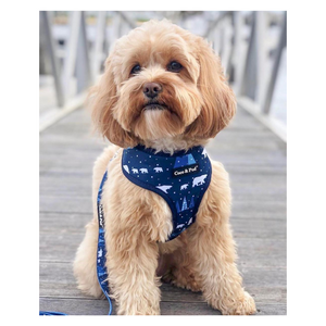 Humphrey in Coco & Pud Arctic Pup Designer Dog Harness