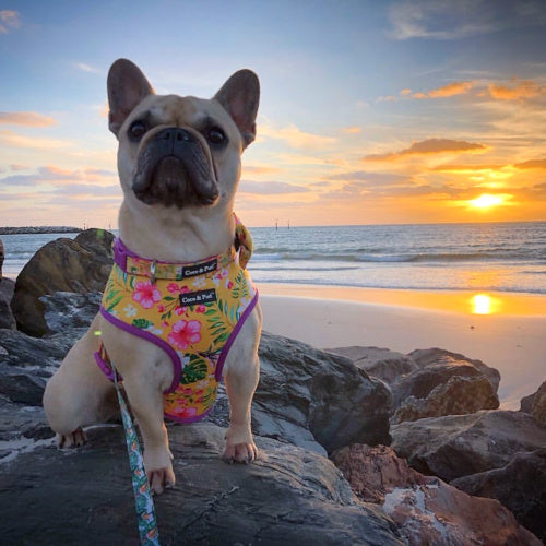Coco & Pud Summer Sunrise Designer Dog Harness