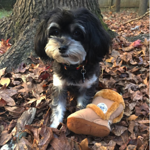 Coco & Pud Cavoodle with Puggs Shoe Dog Toy