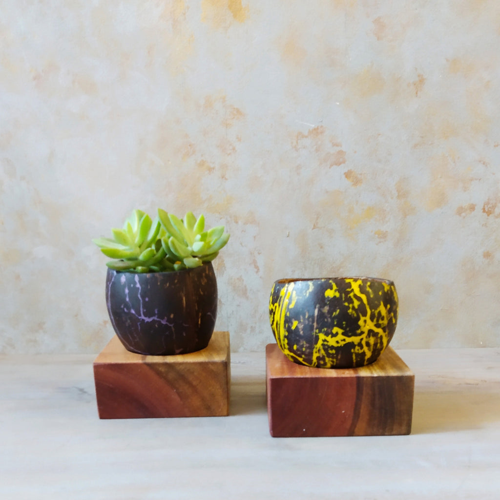 Resin Inlay Coconut Shell Planters  (Set of 2)