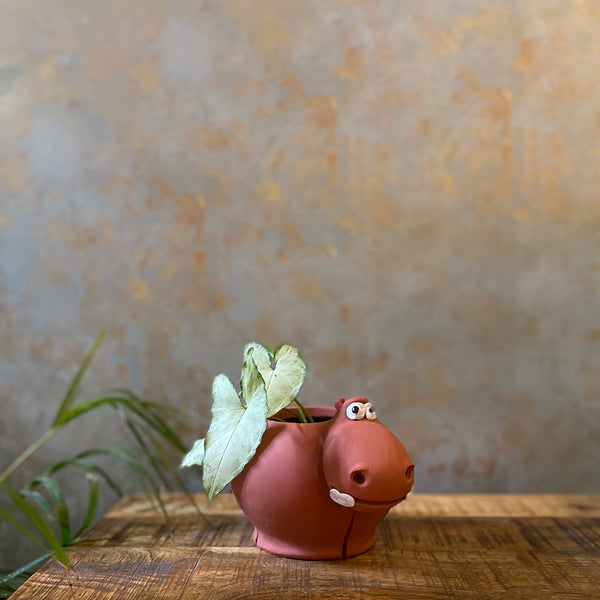 Terracota Hippo Planter