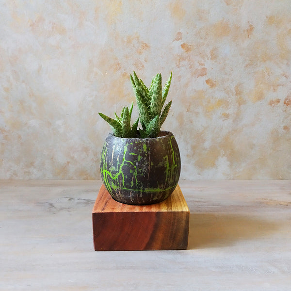 Resin Inlay Coconut Shell Planter