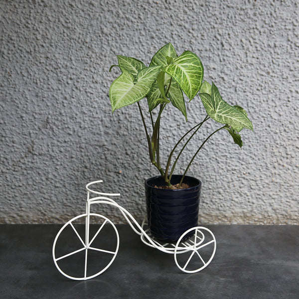Small Cycle Pot Holder (Single)