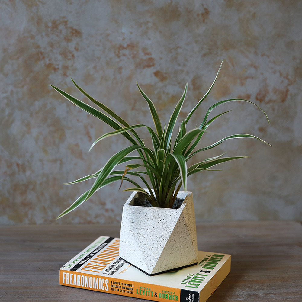 Speckled Concrete Planter