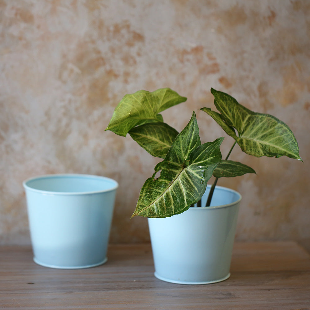 Bucket Planter (Set of 2)