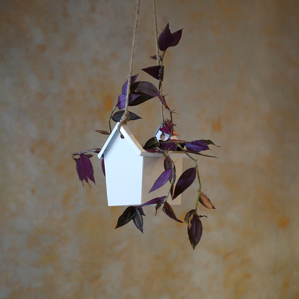 House Hanging Planter