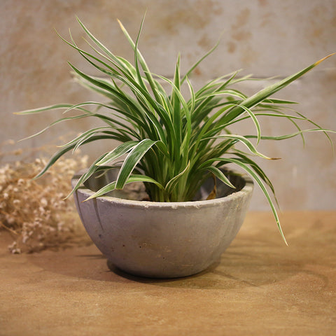 Concrete Planter Bowl