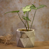 Concrete Planter with Warli art