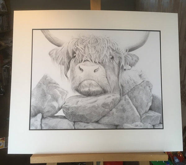 Highland Cow  'Nosey II'- Limited Edition Giclee Print