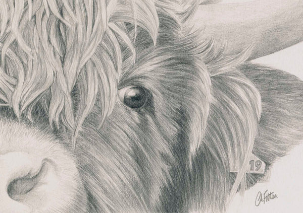Highland Cow  'Nosey'- Limited Edition Giclee Print