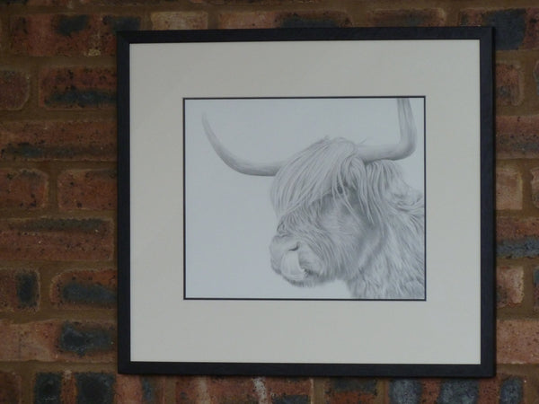 Highland Cow  'Rude MacDude' Limited Edition Giclee Print