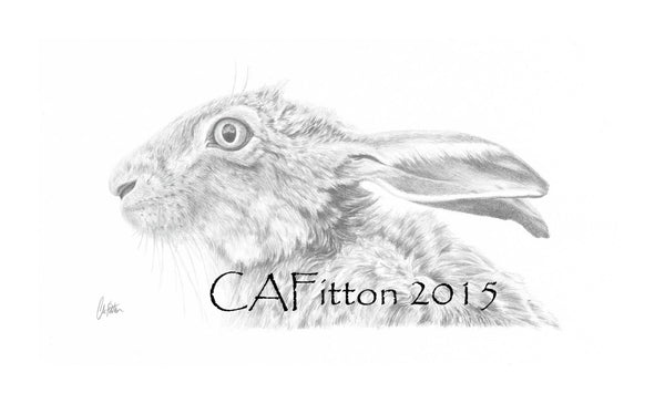 Hare 'Scruffy' - Limited Edition Giclee Print