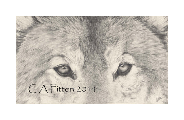 Wolf 'Weighing & Measuring' - Limited Edition Giclee Print