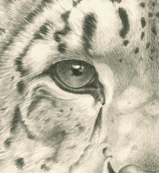 Snow Leopard 'Ice' - Limited Edition Giclee Print