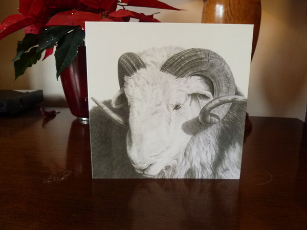 Rambo- Herdwick Sheep Greetings Card