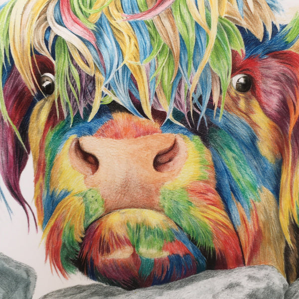 Colour splash Nosey Cow signed print