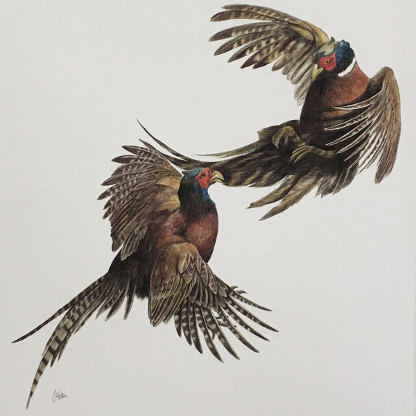 Duel, pheasants fighting