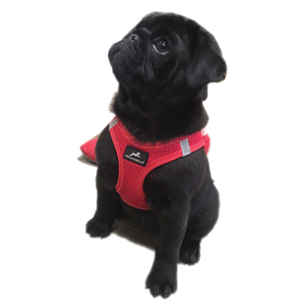 Step- in Air Mesh Vest Harness (9 Colours)