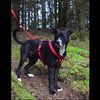Premium Fleece Padded Harness - Miro&Makauri