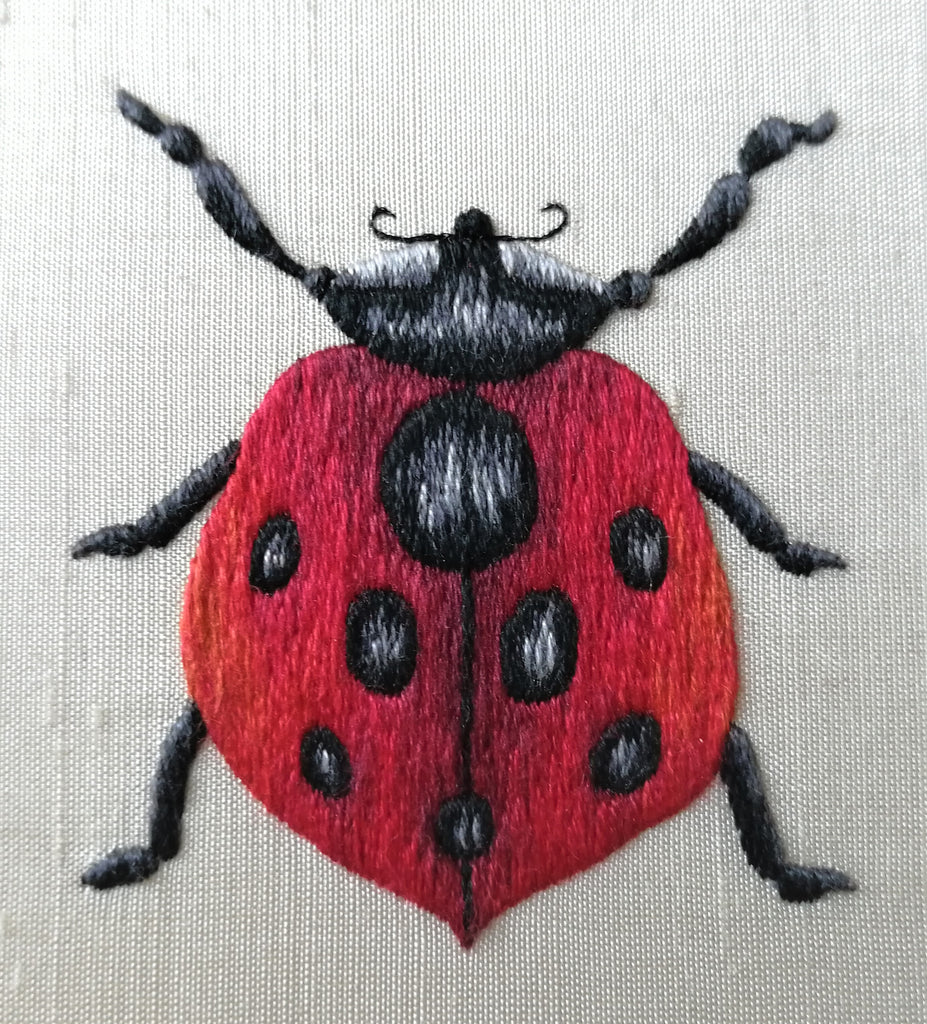 Ladybird by Mandy Ewing