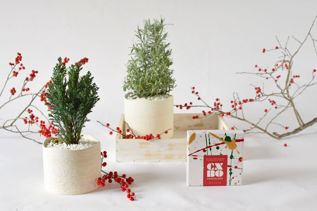 Merry Little Trio of a potted mini lavender tree, potted mini cypress tree and one box of CXBO festive chocolates