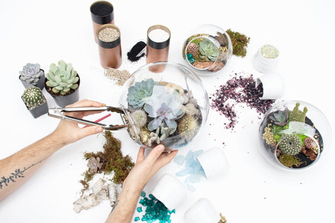 Make Your Own Terrarium Workshop: February 3rd (Sunday) from 11AM-1PM