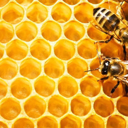 INGREDIENT SPOTLIGHT: BEESWAX & HONEY