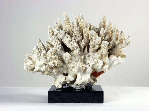 A vintage piece of coral from a private English collection