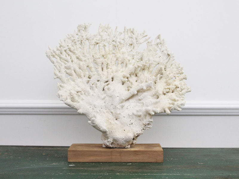 A Vintage Fan Shaped Piece of White Coral from a Private Collection