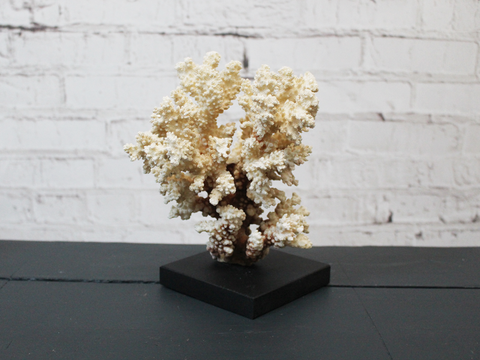 A Vintage Piece of Mounted Coral from a Private Collection