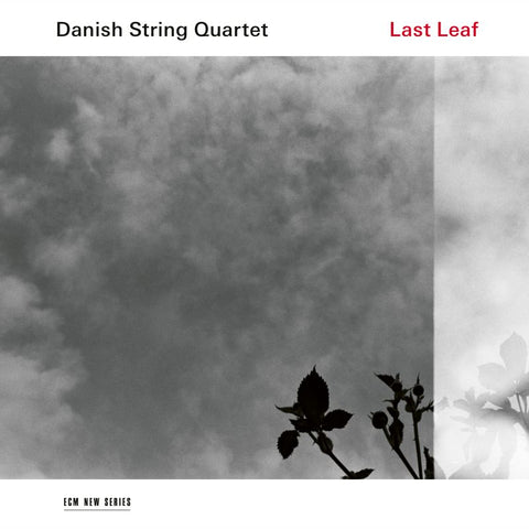 Danish String Quartet – Last Leaf