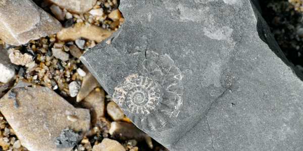 Fossil Hunting? Check The Weather First!