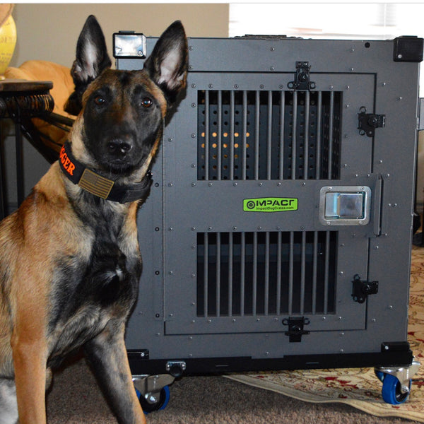 Determined Belgian Malinois with separation anxiety has finally met his match, a dog crate that can keep him contained, and safe.