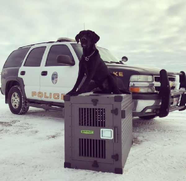 Working Dog Wednesday- Shade, the Explosives Detection Dog!