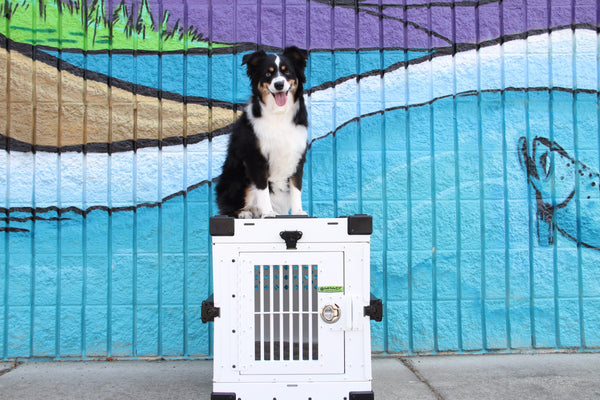 5 TIPS TO HELP MAKE YOUR PUP LOVE THEIR CRATE!