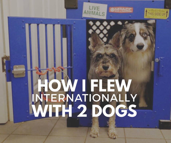 how i flew internationally with 2 dogs