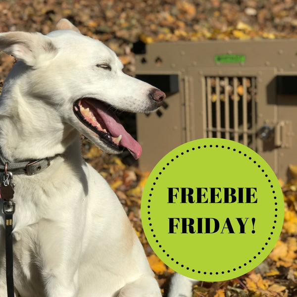 Did you know about FREEBIE FRIDAY???