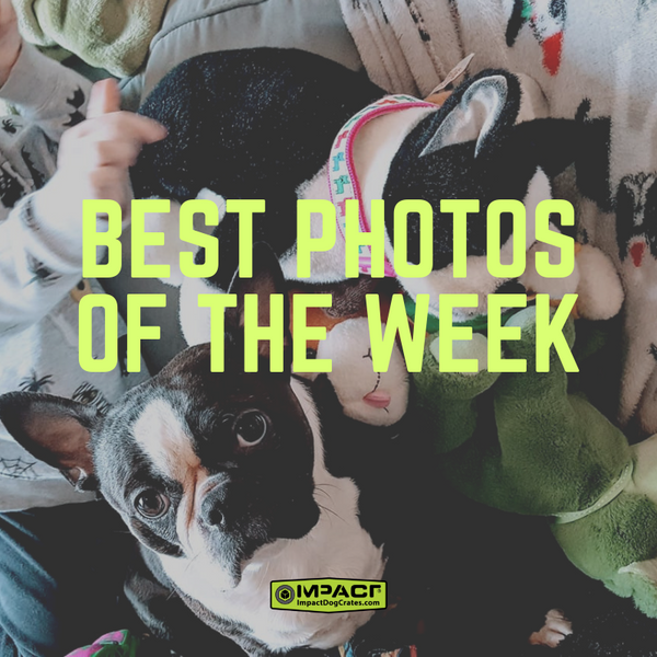 photos of the week Jan. 12th