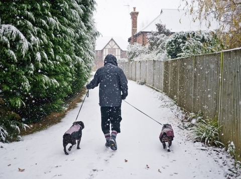 person walking 2 small dogs with leashes on snowy path