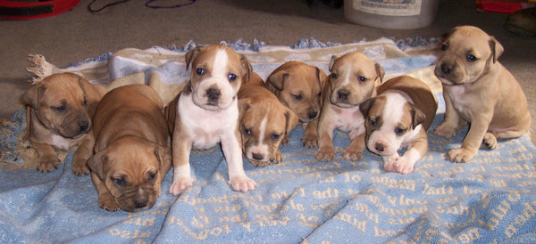 cute litter of small puppies