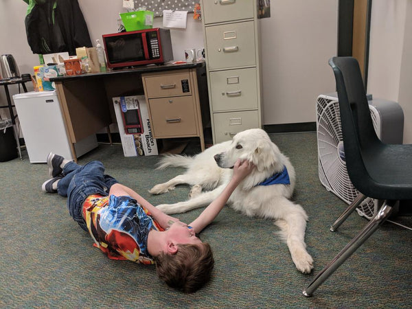 therapy dog chief relaxing with student
