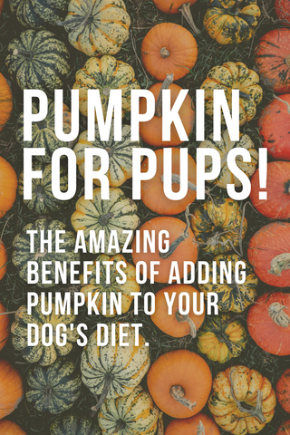 pumpkin for pups the amazing benefits of adding pumpkin to your dog's diet