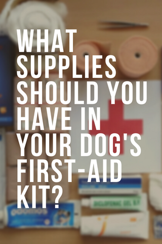 what supplies should you have in your dog's first aid kit