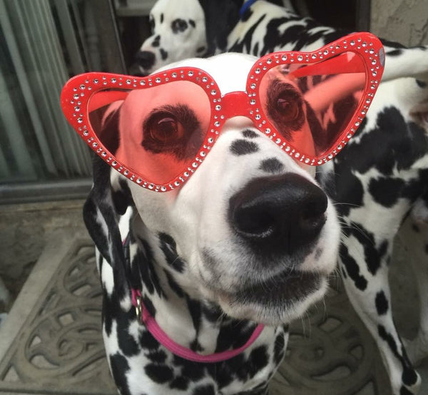 dalmatian dog wearing red heart shaped sunglasses