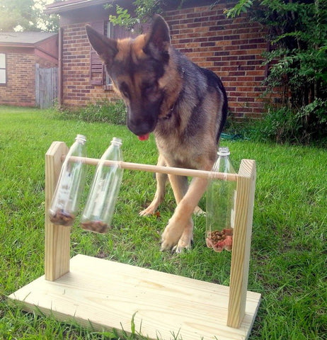 bottle spinning puzzle for dogs