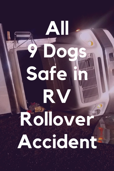all 9 dogs safe in rv rollover accident