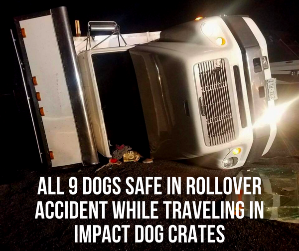 all 9 dogs safe in rollover accident while traveling in impact dog crates