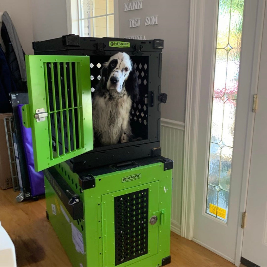 black and lime green dog crates